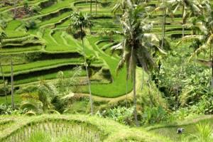 Bali_0710a
